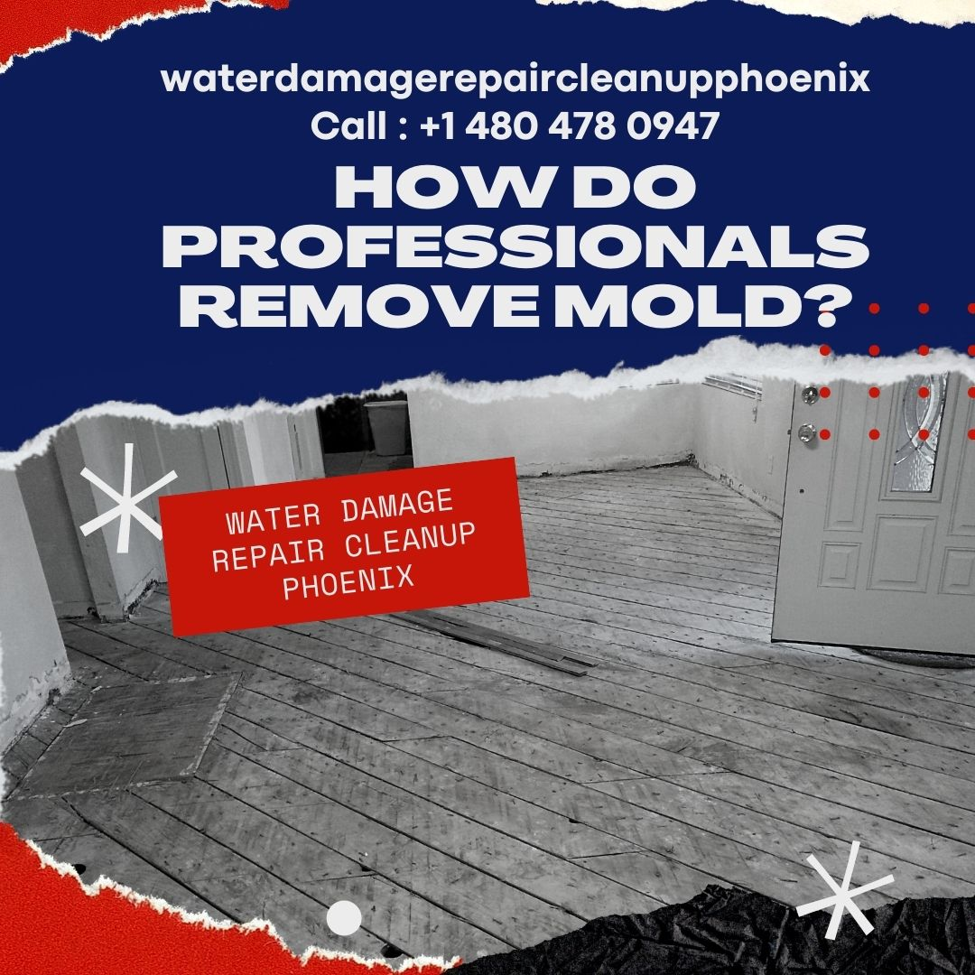 How do Professionals Remove Mold