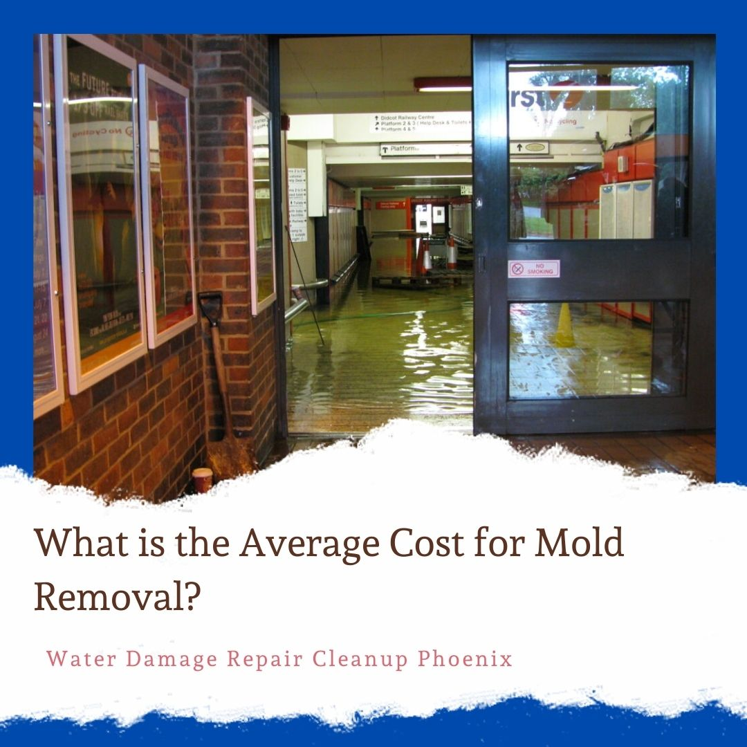 What is the Average Cost for Mold Removal
