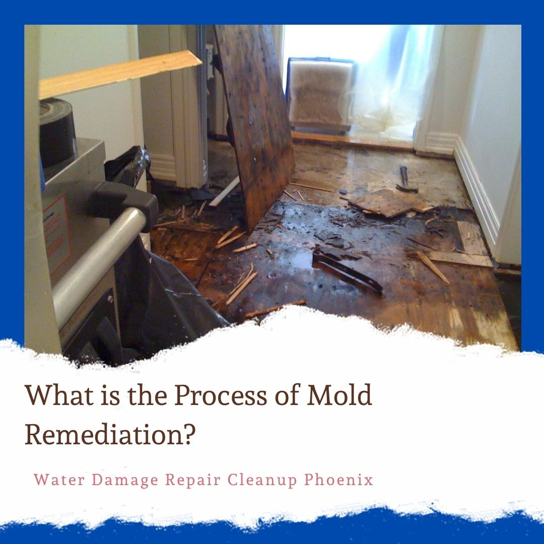 What is the Process of Mold Remediation